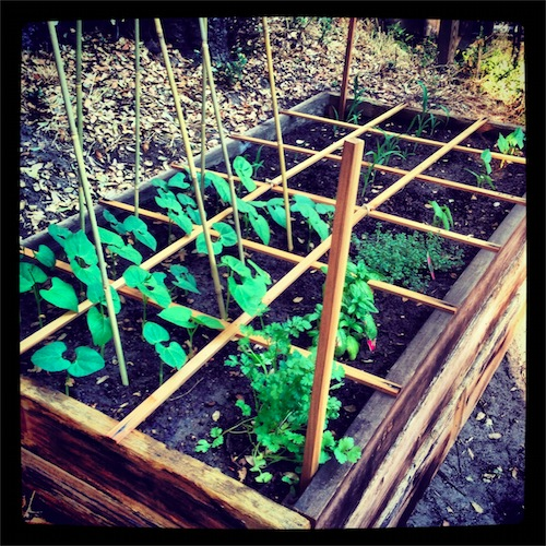 V is for Vegetable...Garden